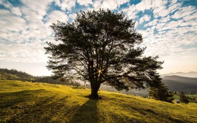 A Natural, Earth Friendly Way to Come Back as a Tree, with Bios Urn Co-Inventor Roger Moline Navarro